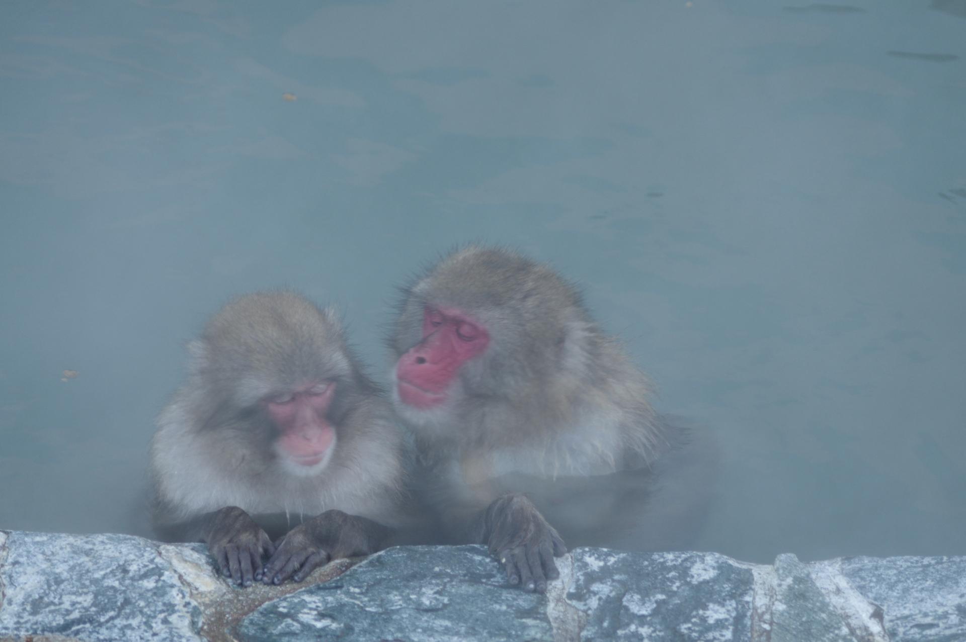 【泉質辞典】長野県の温泉は「9つの泉質」から選ぼう